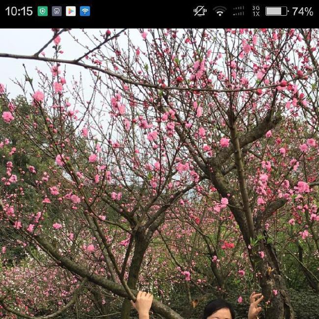 傻傻的幸福资料照片_重庆征婚交友_珍爱网
